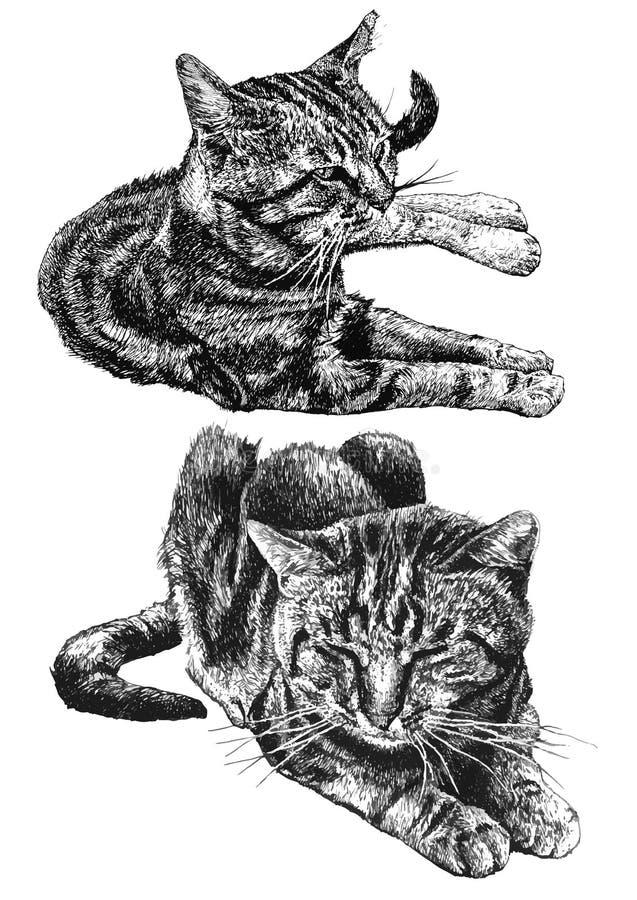 Illustration du mensonge de deux chats illustration de vecteur
