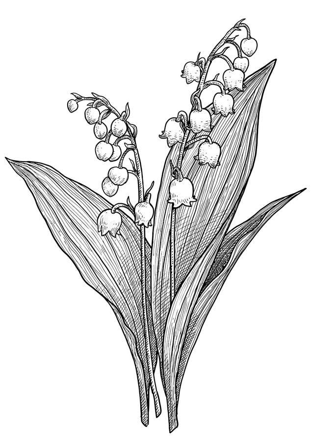 Illustration De Dessin De Fleur Du Muguet R Illustration De