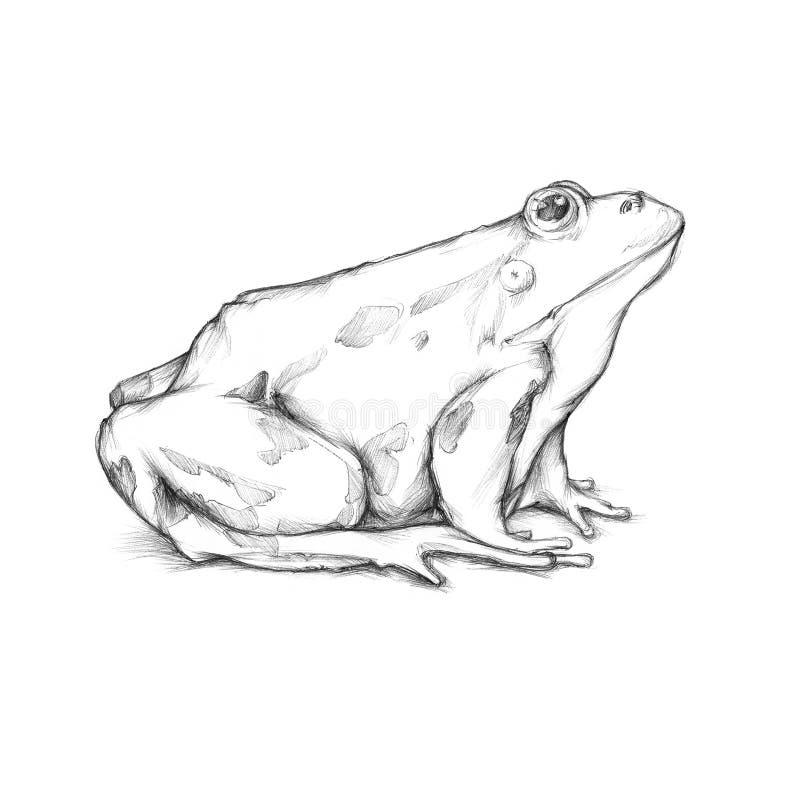 Illustration eines Frosches lizenzfreie abbildung