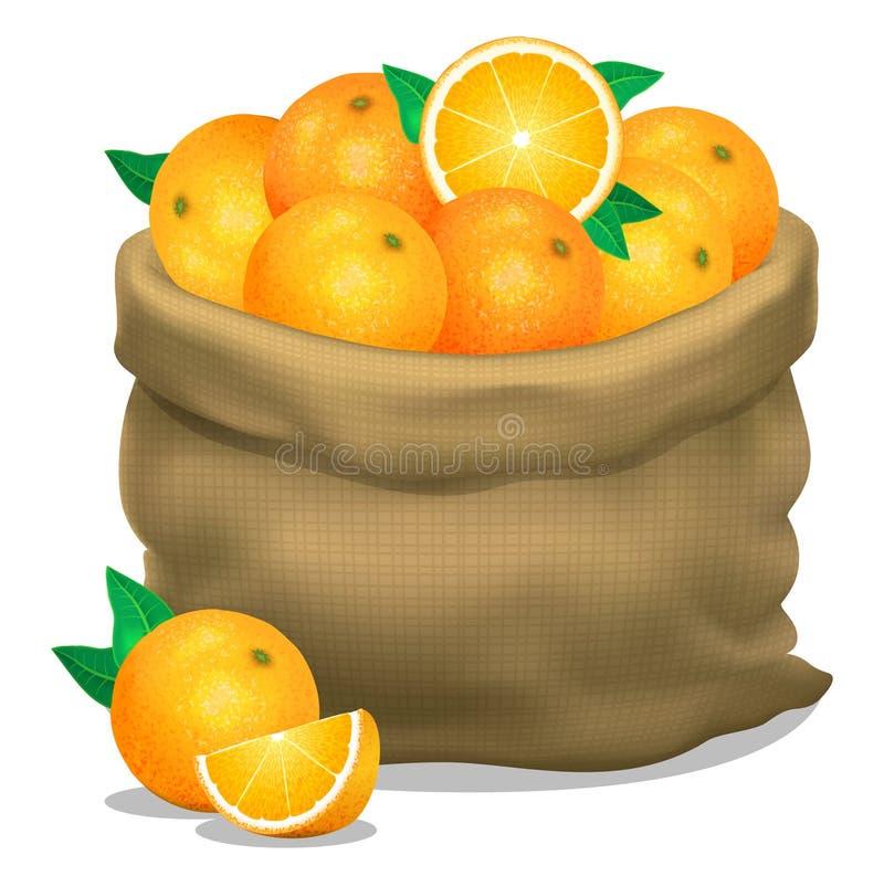 Illustration eines Sacks Orangen auf einem weißen Hintergrund Vektor lizenzfreie abbildung