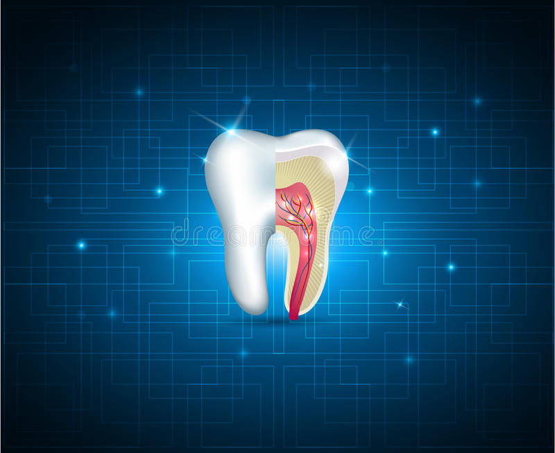 Illustration en coupe de dents belle illustration de vecteur