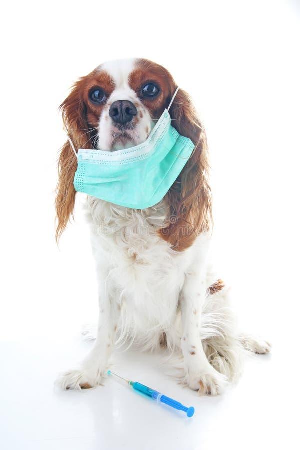 Illustration en difficulté de photo de chiot de chien Masque animal de vétérinaire de docteur d'animal familier sur le chiot Chie photos stock