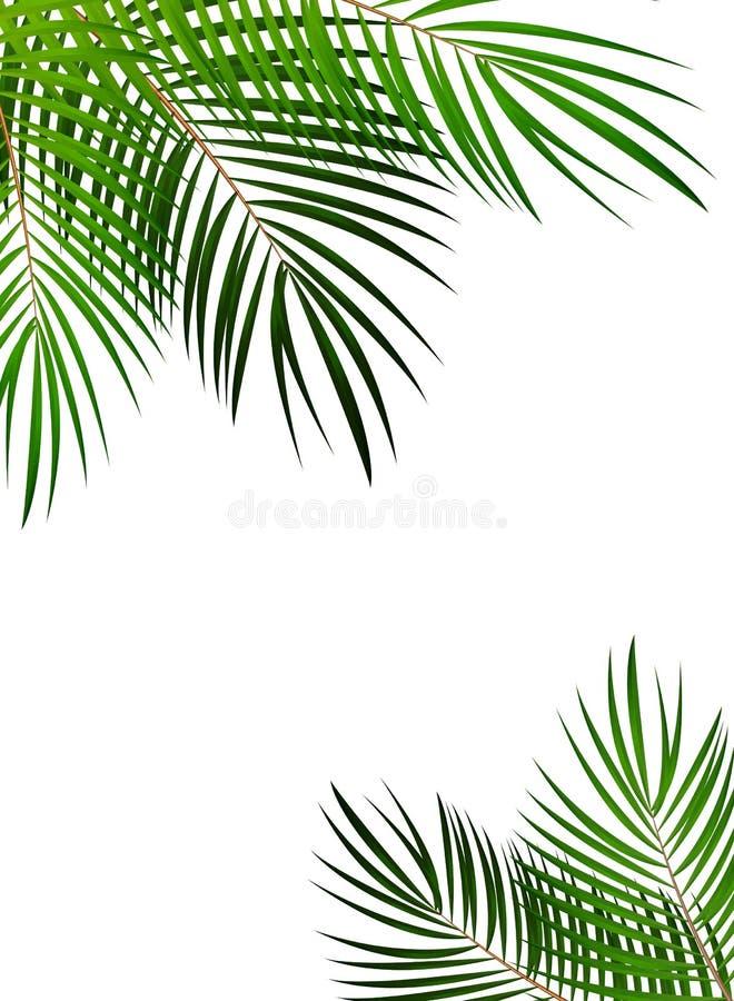 Illustration En Feuille De Palmier De Fond De Vecteur Illustration de Vecteur - Illustration du ...