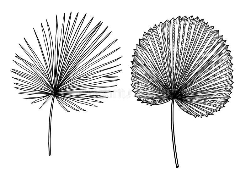 Illustration en feuille de palmier, dessin, gravure, encre, schéma, vecteur illustration libre de droits
