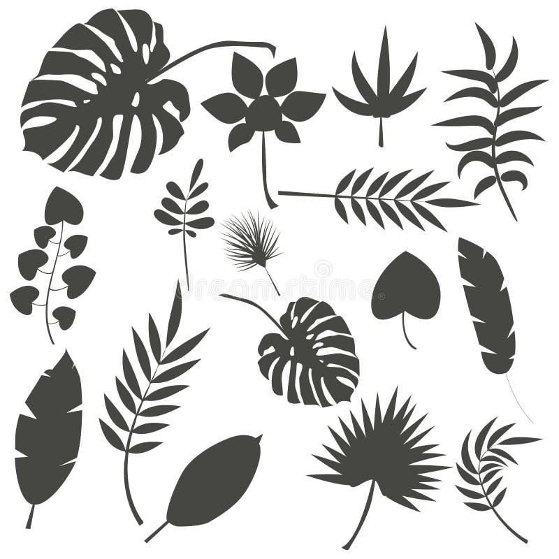 Illustration exotique de vecteur de feuille de vert de jungle de feuilles d'été tropical de paume photos libres de droits