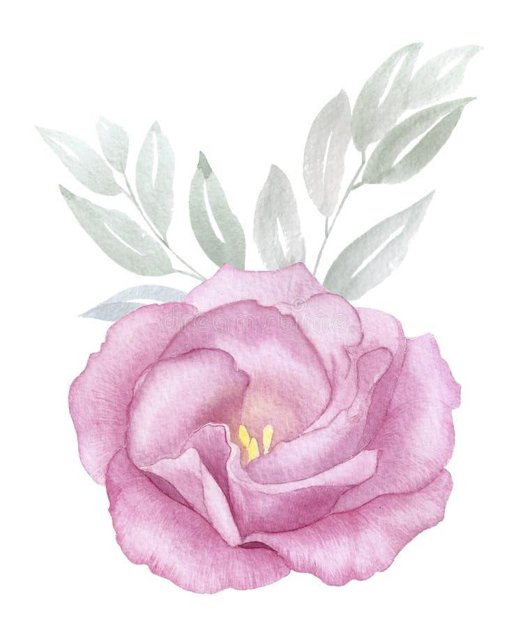 Illustration för akvarell för tappningrosa färgblomma handgjord blomningen steg hälsning inbjudan, bröllop, födelsedagkort stock illustrationer