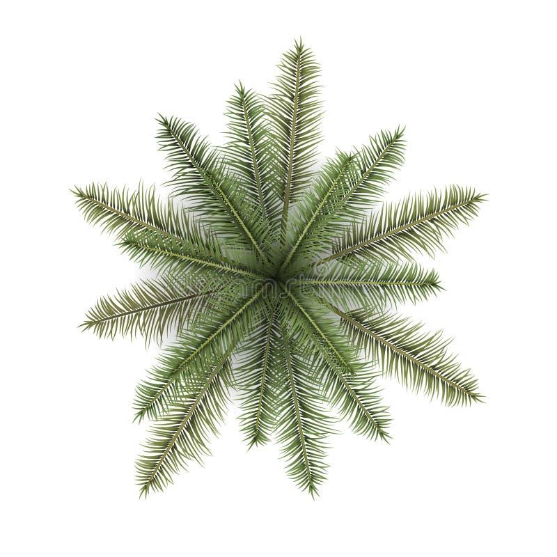 Illustration för bästa sikt för vektor realistisk av palmträdet som isoleras på vit bakgrund royaltyfria foton