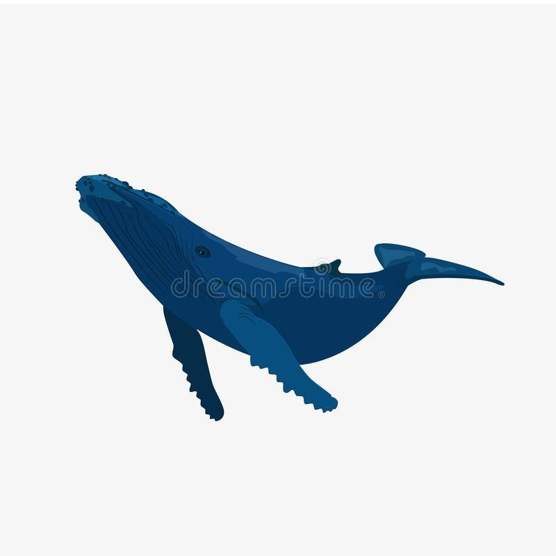 Illustration för blått val stock illustrationer