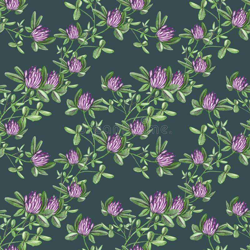 Illustration för filial för blomma för röd växt av släktet Trifolium för vattenfärg för utdragen modell för hand sömlös på mörkt  royaltyfri illustrationer