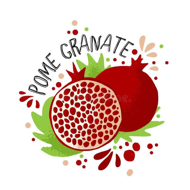 Illustration för granatäpple för vektorhandattraktion kulör Purpurfärgade röda granatäpplen med trämassa- och fruktben och gröna  royaltyfri illustrationer