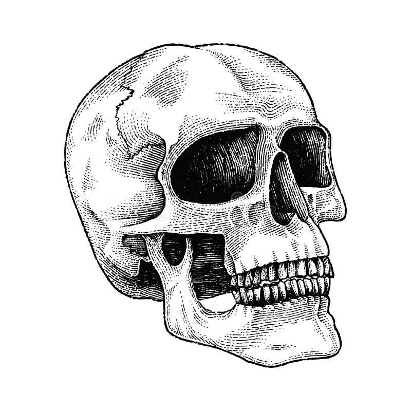 Illustration för gravyr för skallehandteckning vektor illustrationer