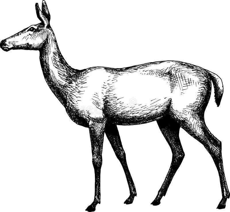 Illustration för hand för tappning för hjortkvinnlig B utdragen royaltyfri illustrationer