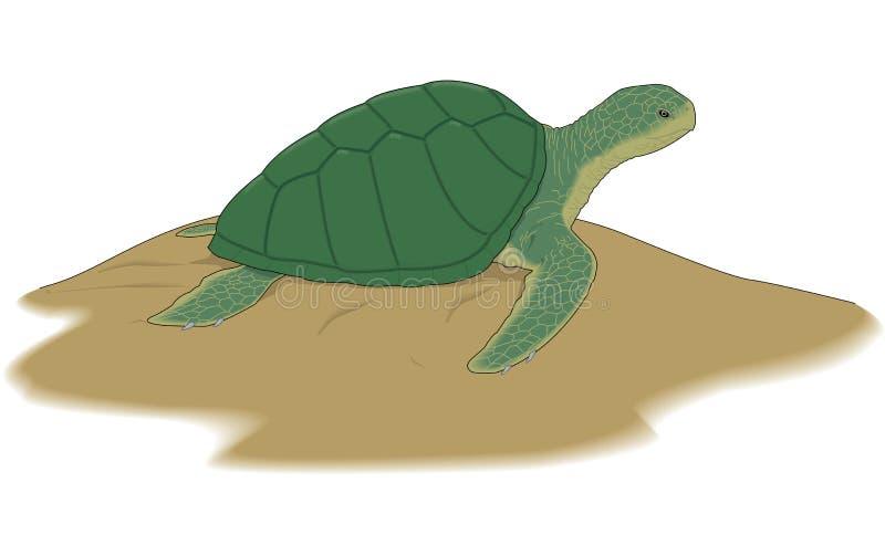 Illustration för havssköldpadda royaltyfri illustrationer