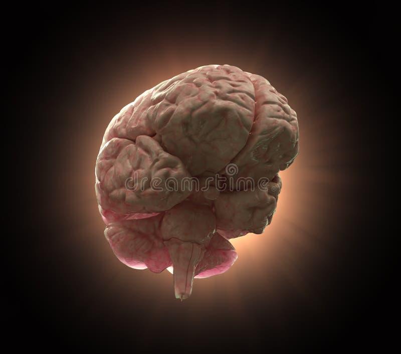 illustration för hjärnbegreppshuman vektor illustrationer
