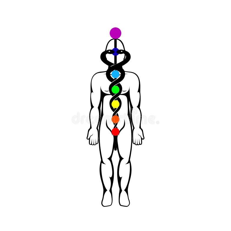 Illustration för Kundalini energivektor royaltyfri illustrationer
