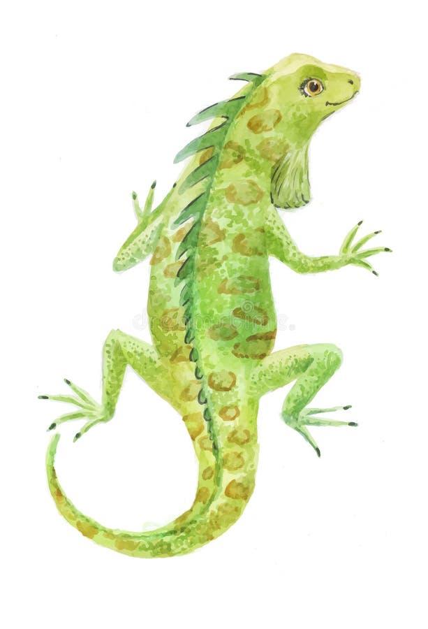Illustration för leguanvattenfärgvektor royaltyfri illustrationer