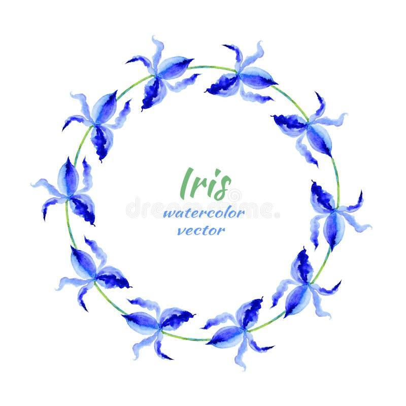 Illustration för målning för vektor för vattenfärg för irisblomma hand dragen, blom- rund ram, blå dekorativ växt- krans för vektor illustrationer