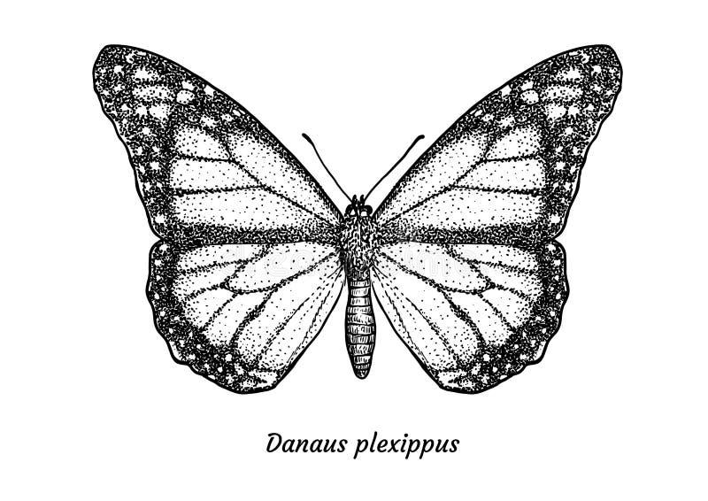 Illustration för monarkfjäril, teckning, gravyr, färgpulver, linje konst, vektor vektor illustrationer