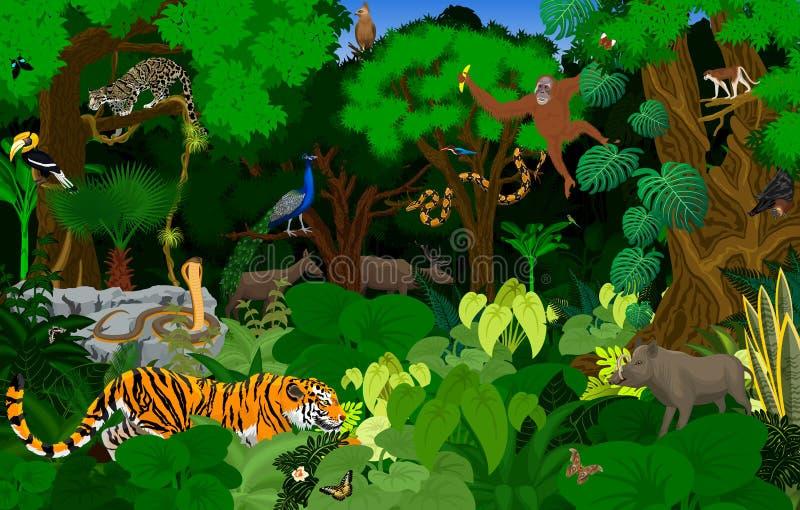 Illustration för rainforest för vektorThailand djungel med djur royaltyfri illustrationer