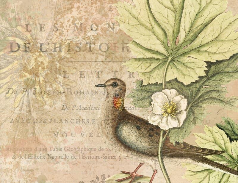 Illustration för tappningvattenfärgfågel - collagebakgrundspapper - bekymrad textur - naturhistoria stock illustrationer