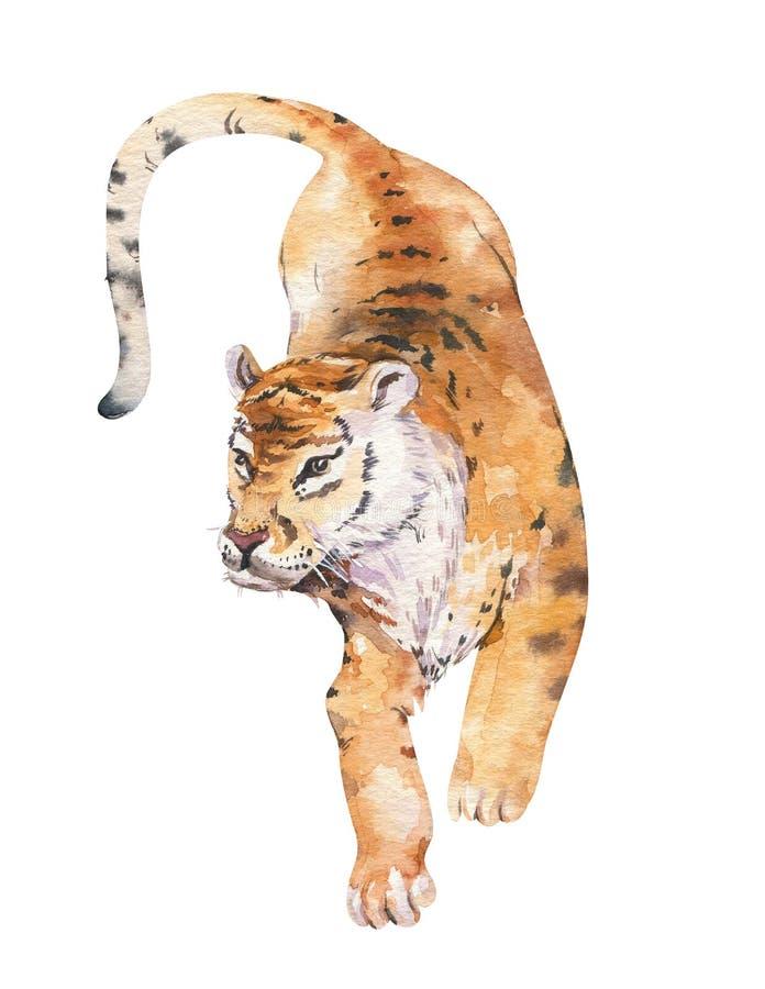 Illustration för tropisk tiger för vattenfärg djur isolerad, axotic djur för lös katt växtmonstera, liandjungelkonstverk vektor illustrationer