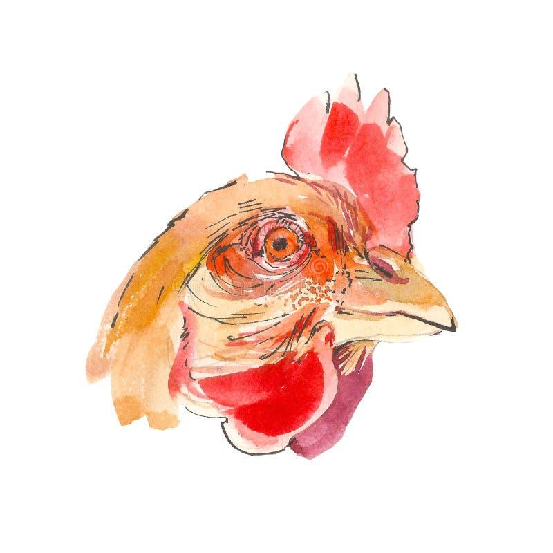 Illustration för tuppståendevattenfärg som isoleras på en vit bakgrund Huvud för fågel för handteckningslantgård vektor illustrationer