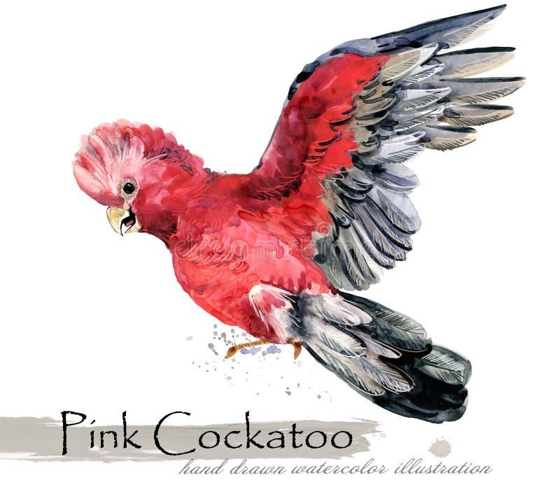 Illustration för vattenfärg för papegojafågel hand dragen vektor illustrationer