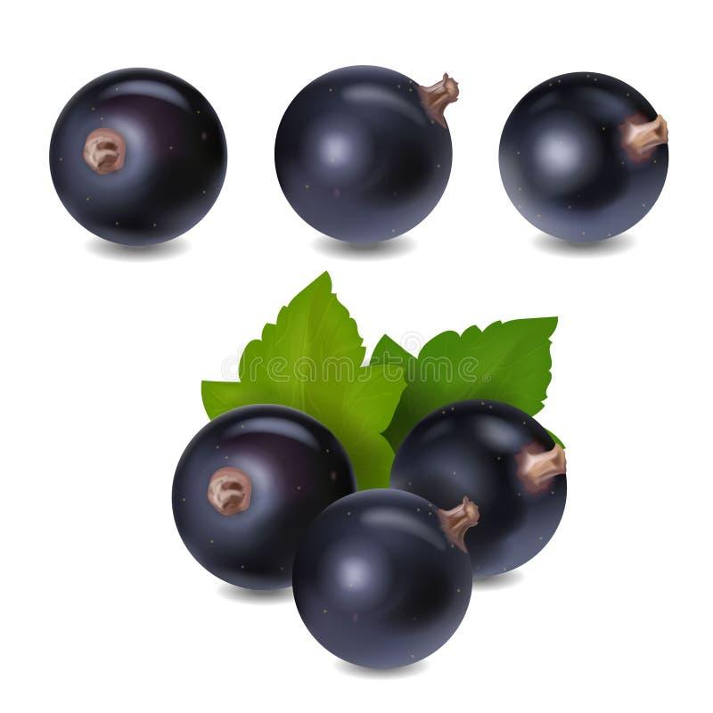 Illustration för vektor 3d för svart vinbärbär realistisk stock illustrationer