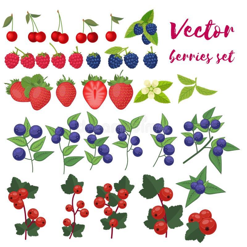 Illustration för vektor för bäruppsättning Jordgubbe Blackberry, blåbär, körsbär, hallon, röd vinbär Bär och deras royaltyfri illustrationer