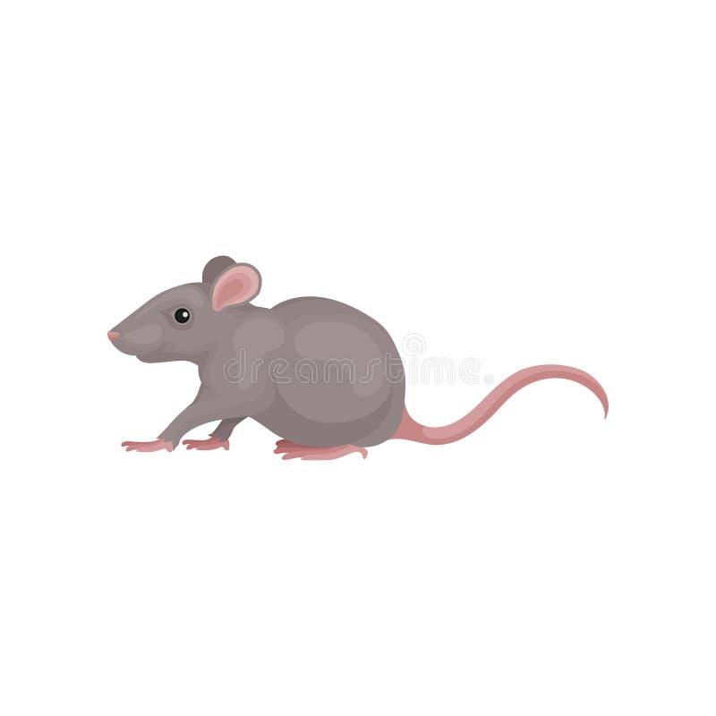 Illustration för vektor för grå färgmusgnagare djur på en vit bakgrund stock illustrationer