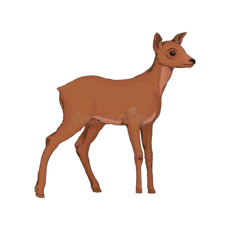 Illustration för vektor för lös nordlig skog för Doe djur på en vit bakgrund vektor illustrationer