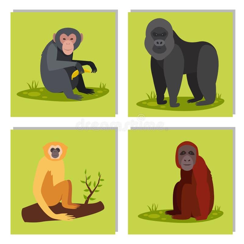 Illustration för vektor för schimpans för apa för zoo för olika bröd för apateckendjur lös royaltyfri illustrationer