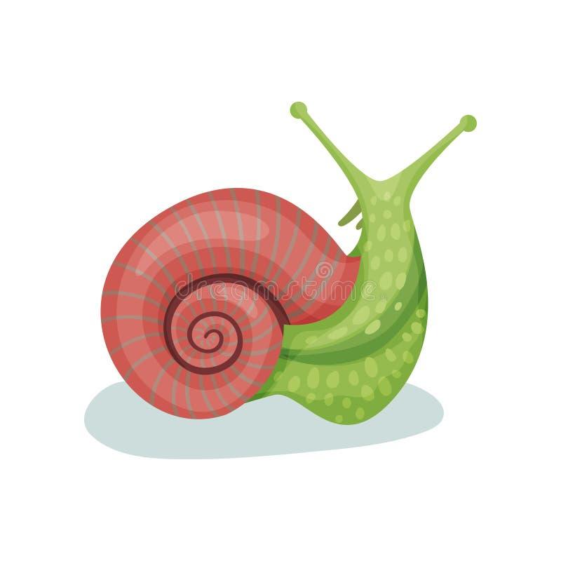 Illustration för vektor för snigelgastropodblötdjur på en vit bakgrund vektor illustrationer