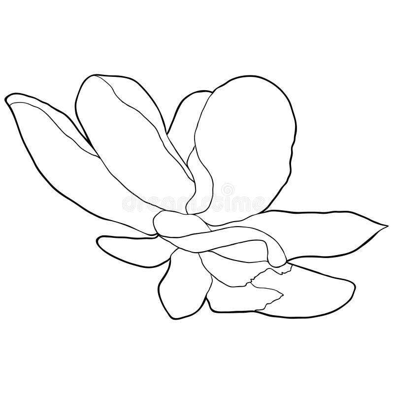 Illustration för vektor för trädgård för färgläggningmagnoliablomma dekorativ stock illustrationer