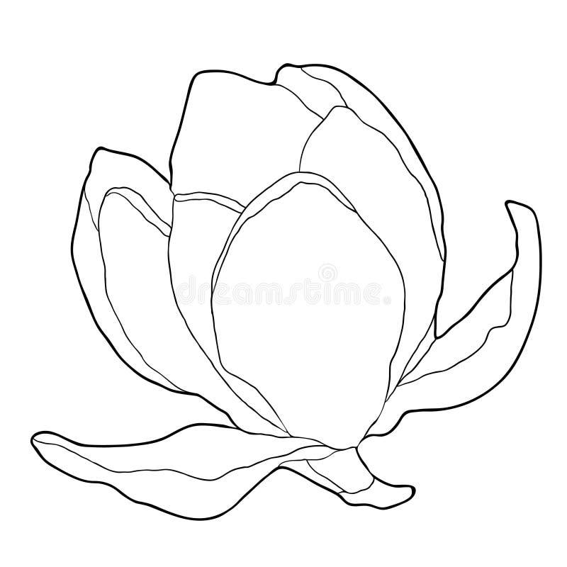 Illustration för vektor för trädgård för färgläggningmagnoliablomma dekorativ royaltyfri illustrationer