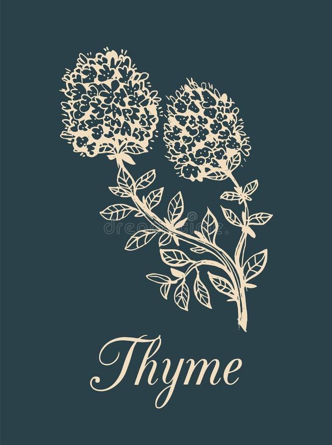 Illustration för vektortimjanfilial med blommor Handen dragit botaniskt skissar av den aromatiska växten Krydda på mörk bakgrund royaltyfri illustrationer