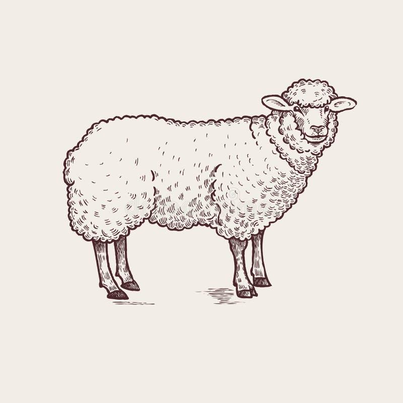 Illustration farm animals - sheep royalty free illustration