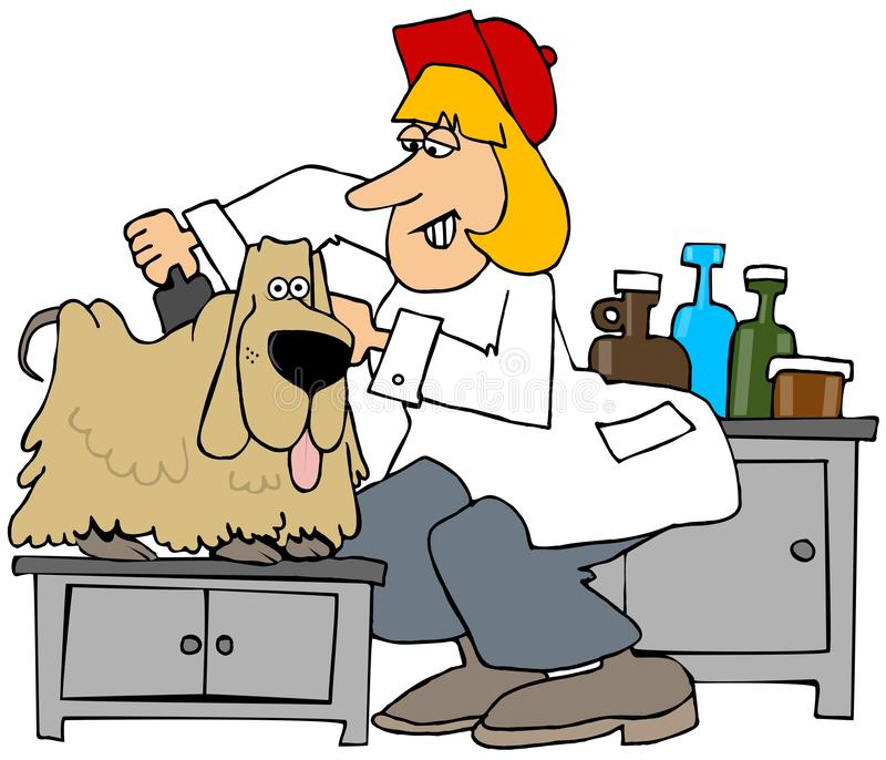 Dog groomer brushing out a pooch stock illustration