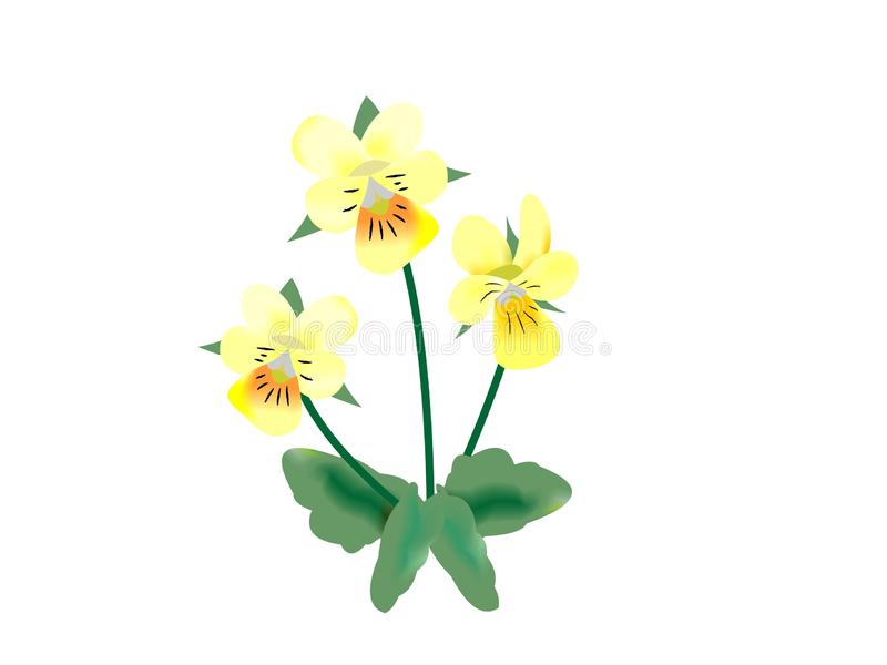Illustration of a field pansy, Viola arvensis royalty free illustration