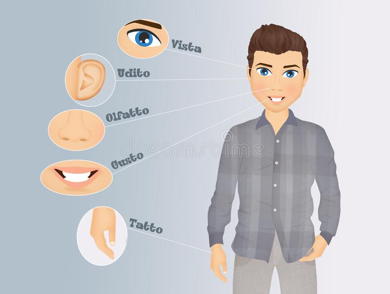 Illustration of five senses vector illustration