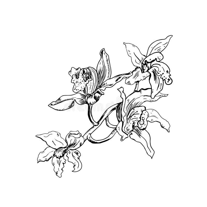 Illustration Florale De Beau Vecteur Monochrome Branche D