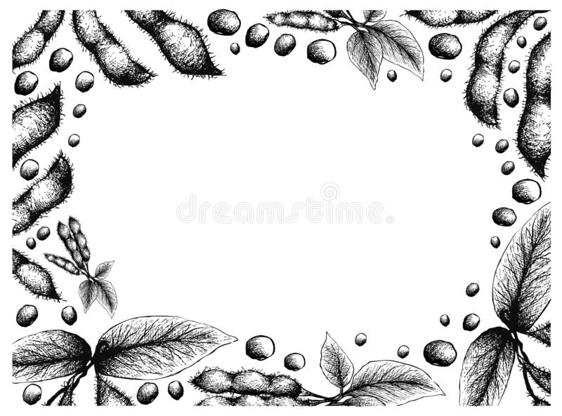Hand Drawn Frame of Delicious Fresh Soybeans. Illustration Frame of Hand Drawn Sketch Fresh Green Soybean or Edamame Pods Isolated on White Background stock illustration