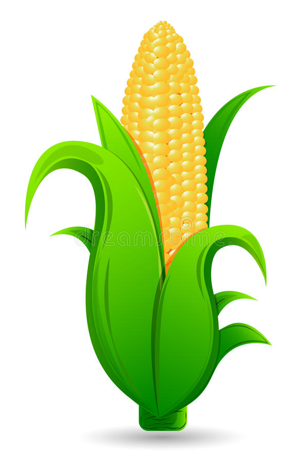 Download Fresh Corn stock vector. Image of nutritious, harvest - 29774324