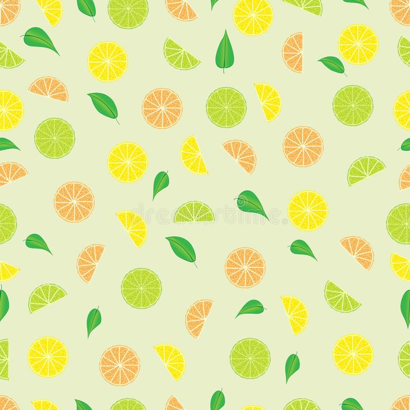Illustration of fresh juicy sliced. Citrus fruits with green small leaves royalty free illustration