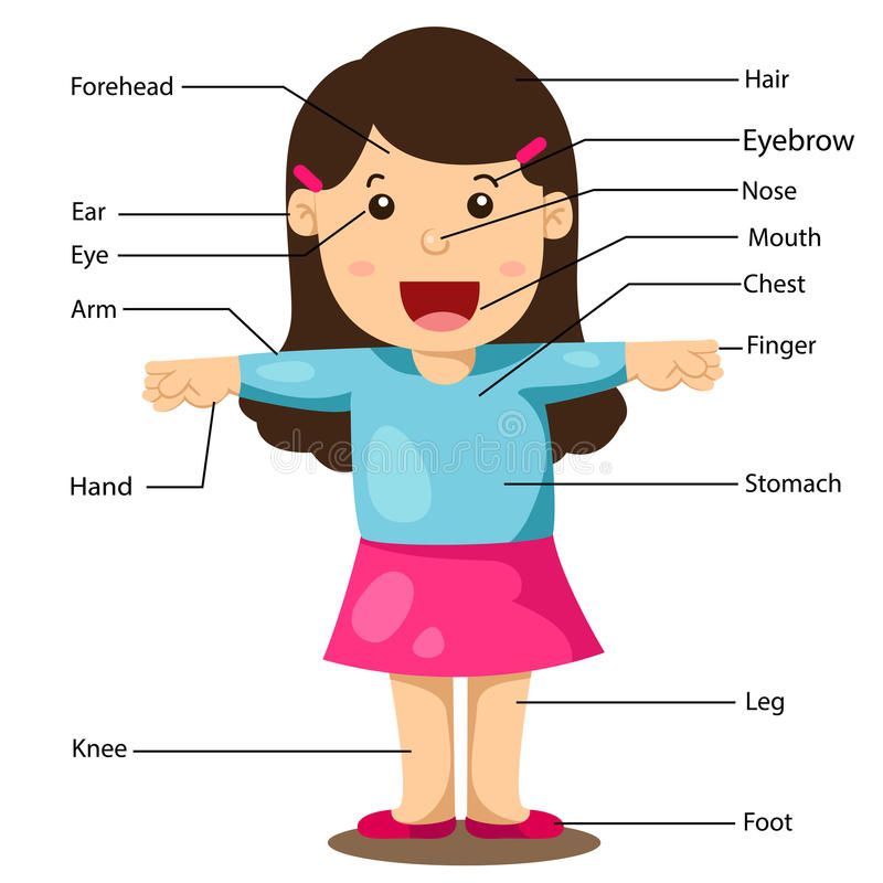 Illustration of Girl With Labeled Body Parts stock illustration