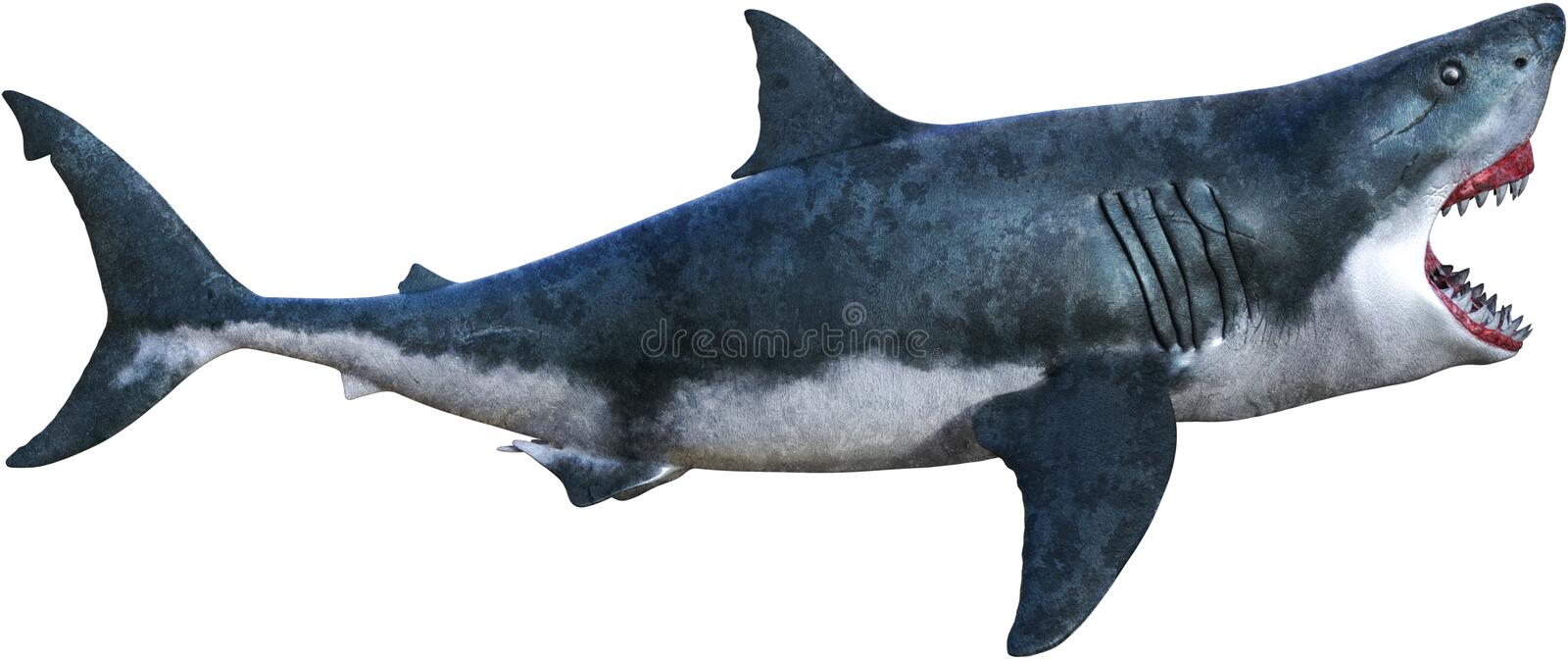 Great White Shark Attack Isolated. Illustration of a great white shark on the attack and ready to bite. Isolated on white, PNG file available royalty free illustration