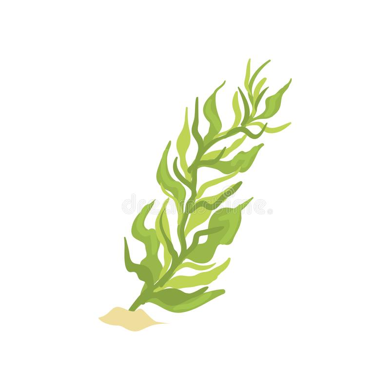 Illustration of green seaweed in cartoon flat design. Aquarium design element. Coral icon. Green seaweed in cartoon flat style. Plant on sandy ocean bottom royalty free illustration