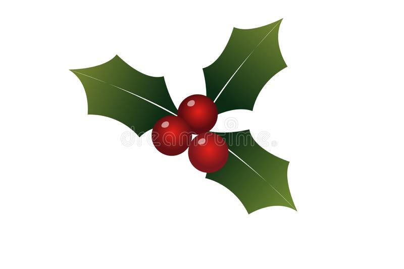Illustration of Holly leaves for Christmas icon on white background. Illustration holly leaves christmas icon white background merry santa spring season winter royalty free stock photo