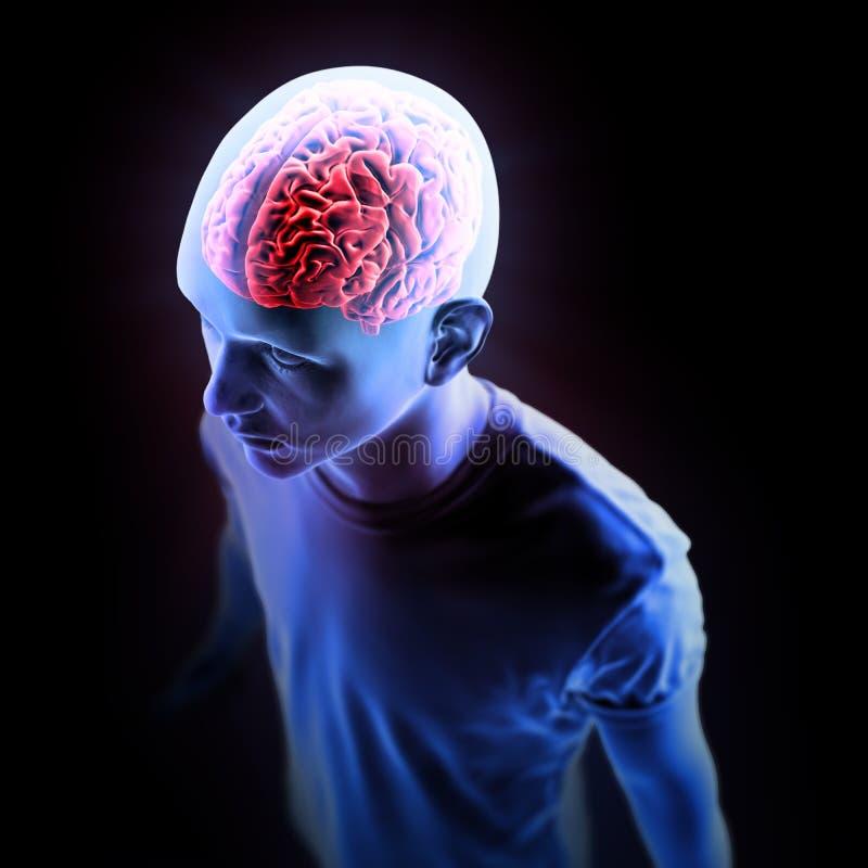 Illustration humaine d'anatomie - cerveau illustration stock