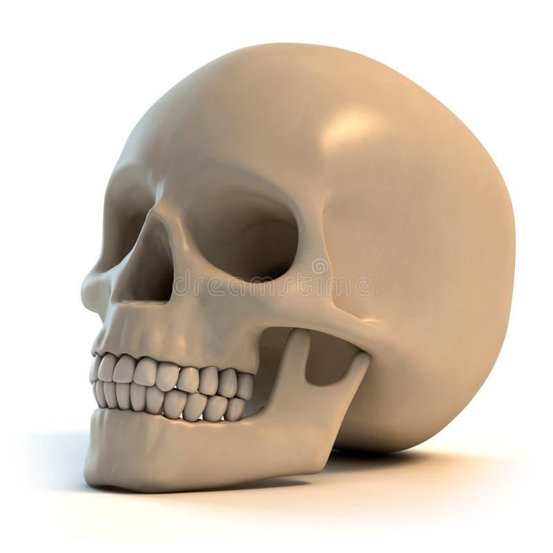 Illustration humaine du crâne 3d illustration libre de droits